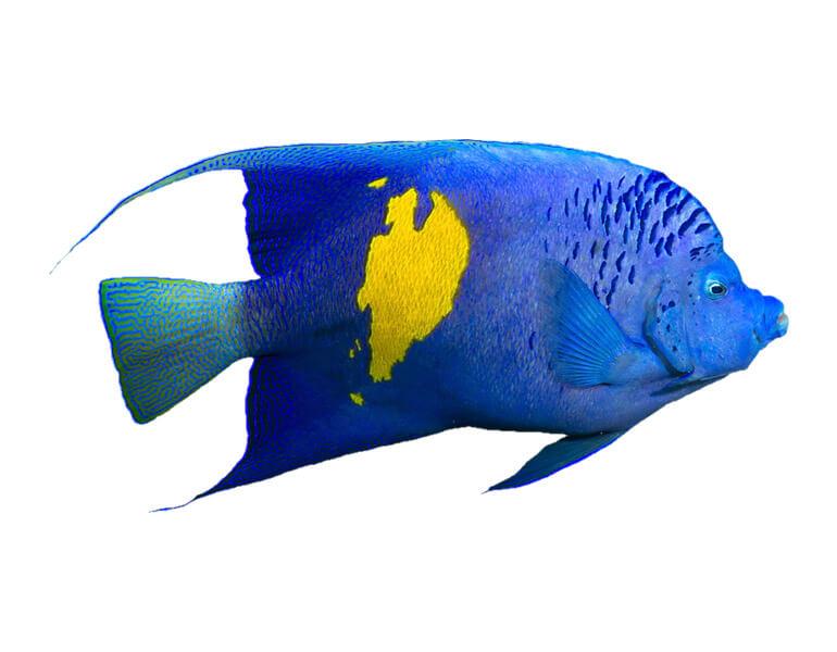 home_underwater_animals2