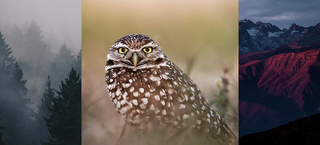 home_wildlife_pic1