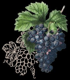 wine3-wines-icon2