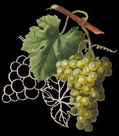 wine3-wines-icon3